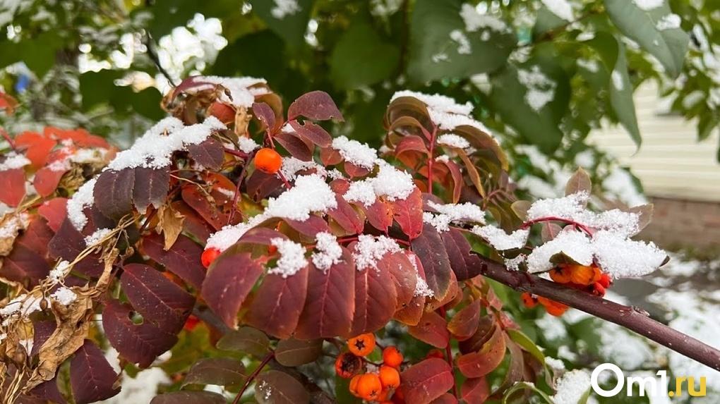Ураганный ветер и мокрый снег. Какая погода ждёт омичей в последнюю неделю октября
