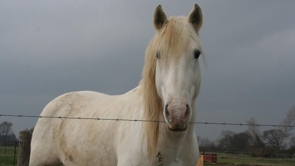 Пьяный омич на коне наехал на любовницу