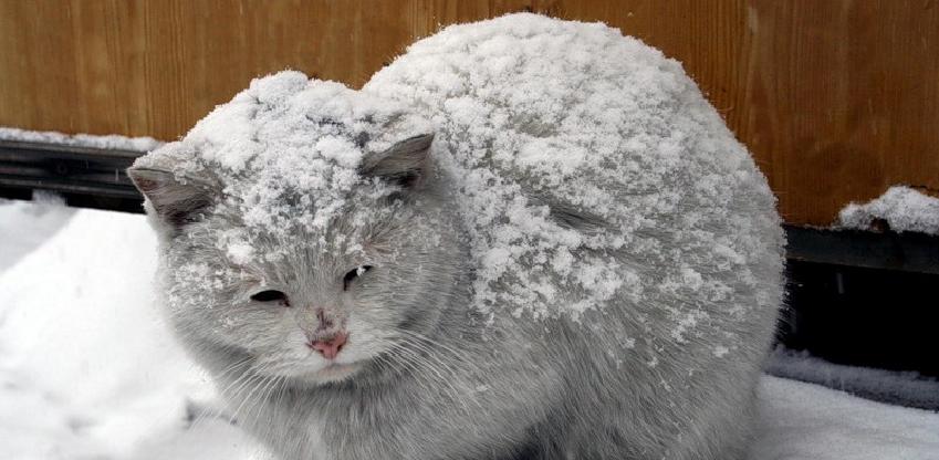 В Омске в мороз выставили на улицу кошек из гуманных соображений
