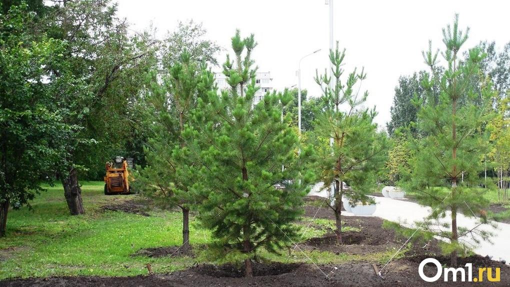 За пять лет на озеленение Новосибирска выделят более двух миллиардов рублей