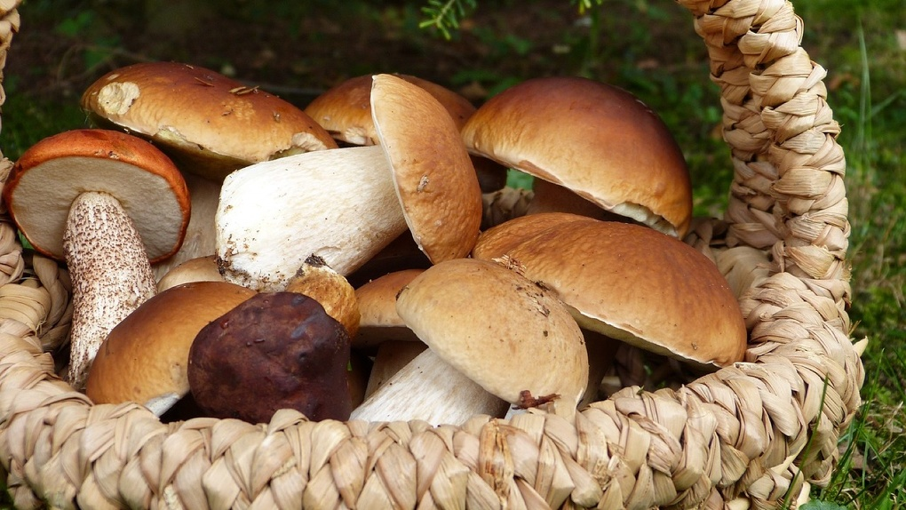 Роспотребнадзор дал советы омичам, как не отравиться грибами