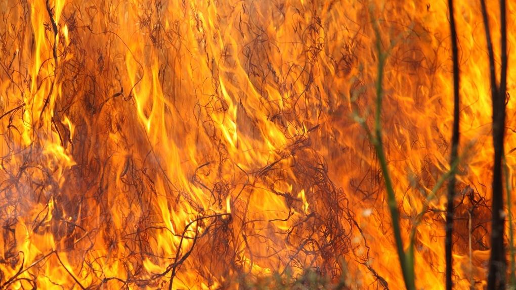 Омичи пожаловались на запах гари из-за лесных пожаров