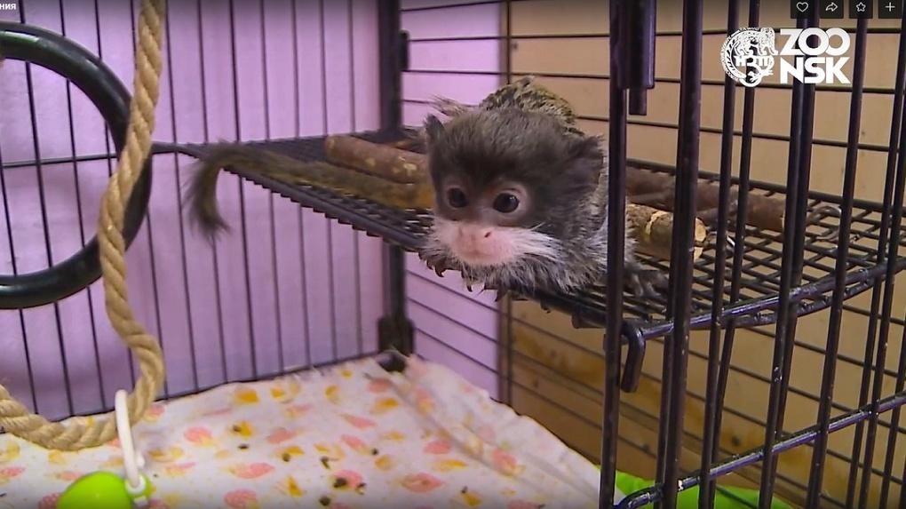 Новосибирский зоопарк показал тайную комнату новорождённых животных