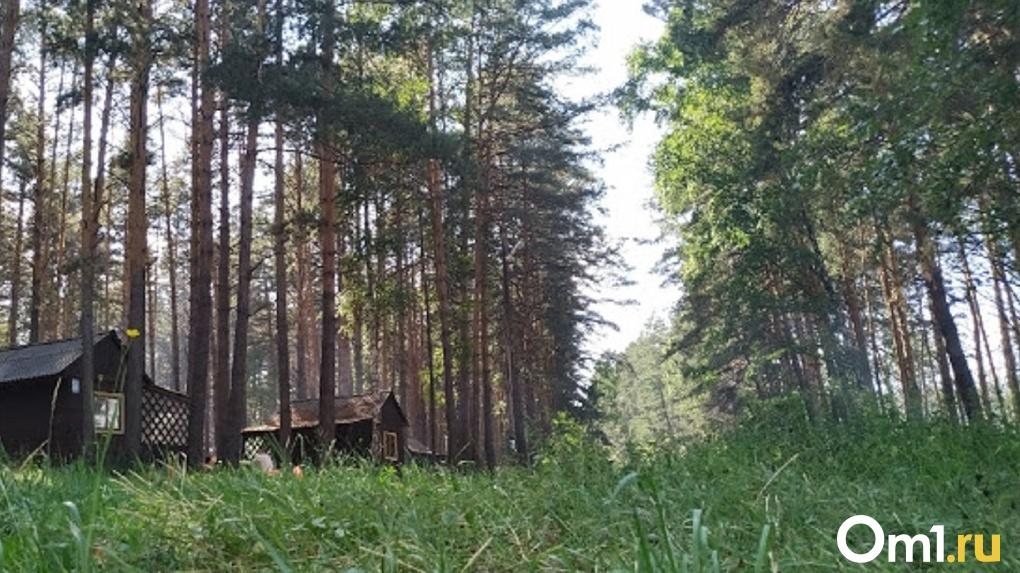 Пропавшую в лесу омичку до сих пор не нашли. Полиция планирует задействовать вертолёт