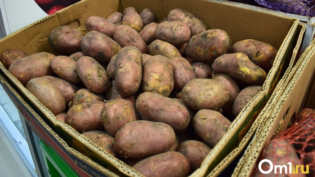 Спасти от проволочника и гнили: новосибирский учёный дала советы по обработке и хранению картофеля