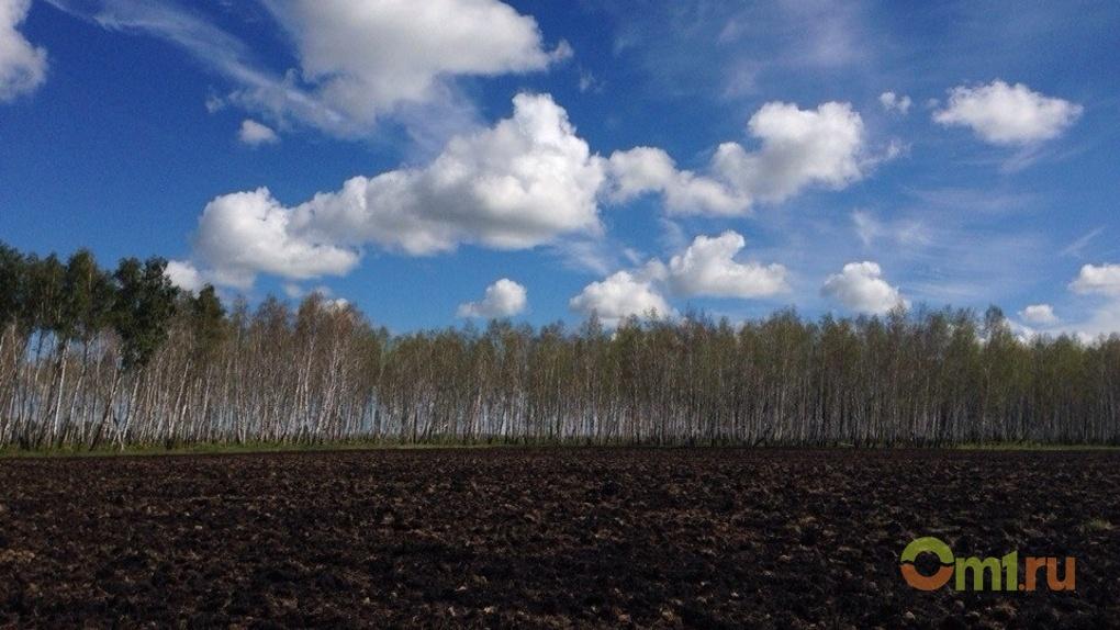 Омское «Цветнополье» получило финансирование в рамках госпрограмм
