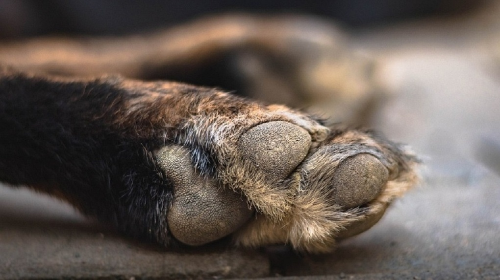 «Изнасиловал собаку»: новосибирского живодёра на три года отправили в колонию