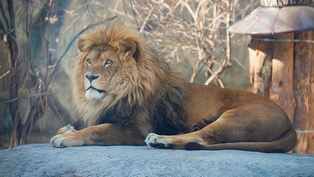 Власти Новосибирска озвучили условия посещения зоопарка