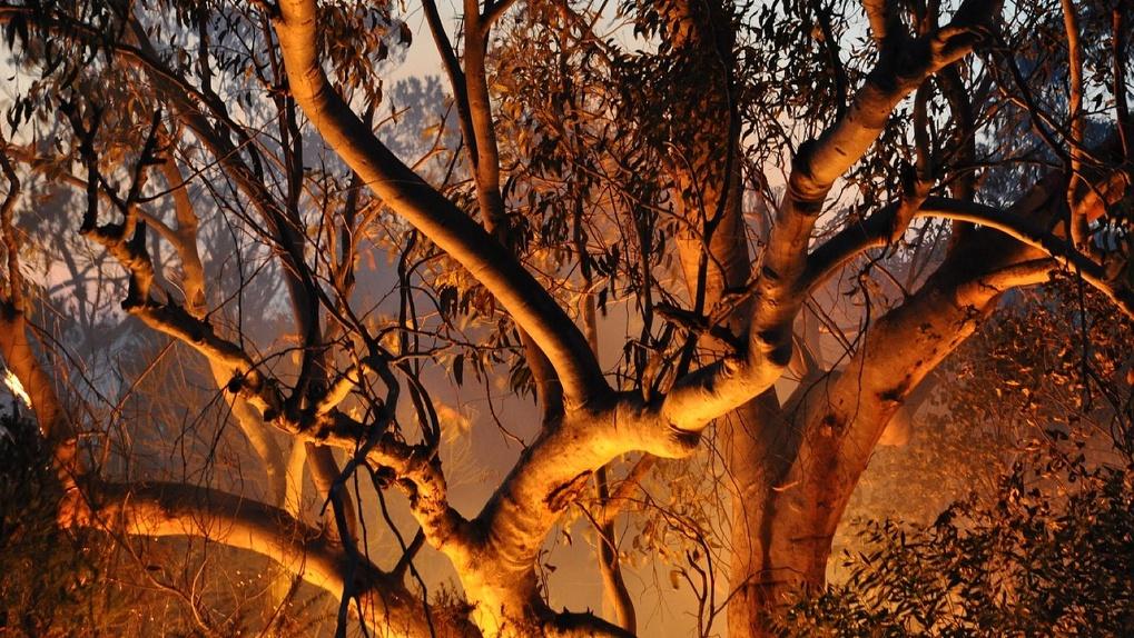 В Омской области может раньше начаться сезон лесных пожаров