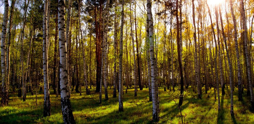 Заблудившихся в лесу под Омском мать с малышкой искали 42 полицейских