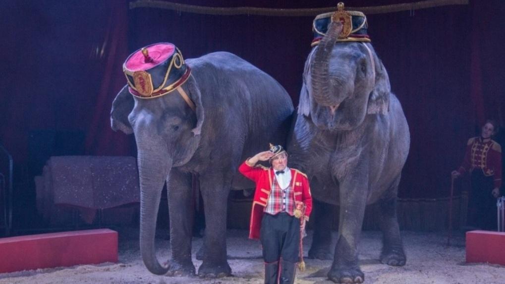 В Омск приехали строптивые слонихи и сбегающая зебра