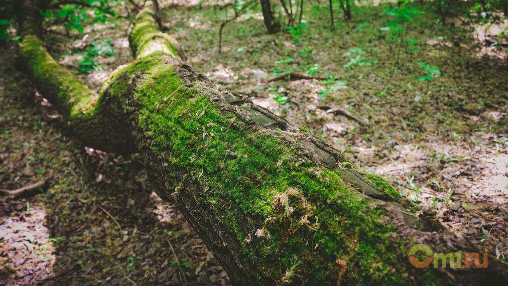 «Омсктехуглерод» срубит почти 200 деревьев ради логистического центра
