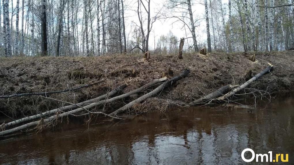 Следы медведей и глухое болото: названы итоги поиска пропавшего самолёта на границе Омска и Новосибирска