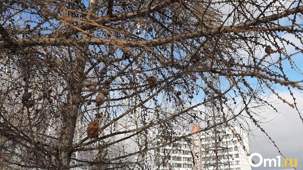 Мэр Новосибирска отозвал генплан города на доработку