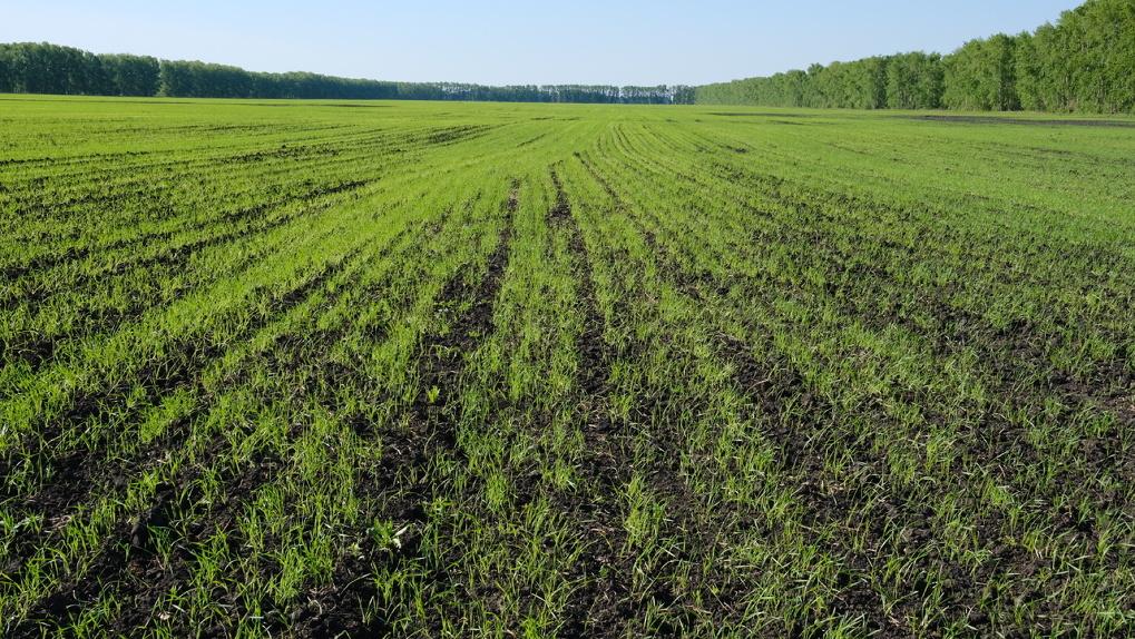 Власти Новосибирской области поддержат сельское хозяйство в условиях пандемии