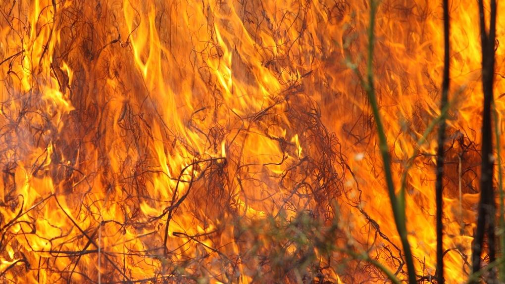 Могут гореть дома. Спасатели прогнозируют новые пожары в Омской области