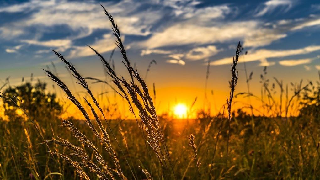 Синоптики рассказали, сколько ещё продержится знойная жара в Омске