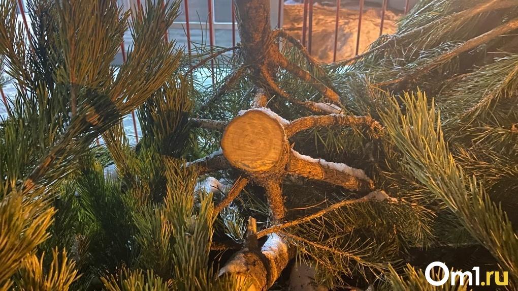 Из новосибирского сквера украли «вонючие» ёлки