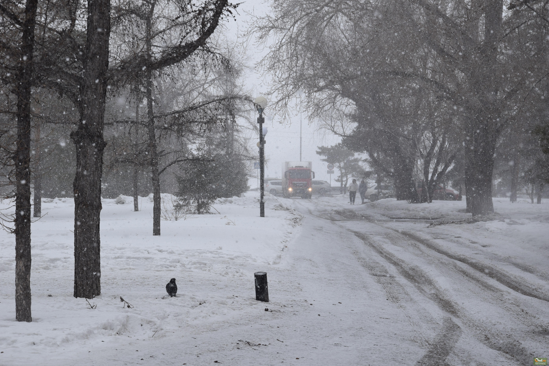 считают, что снег в омске сегодня фото нижняя