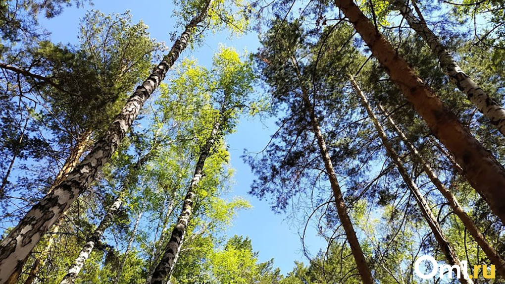«Золотые дрова». Омичи перед зимним сезоном остались без топлива. Разбираемся в причинах