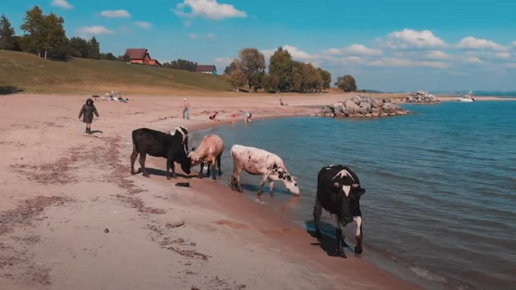 Деревенская романтика: жительница Новосибирска сняла на видео живописные берега Обского моря