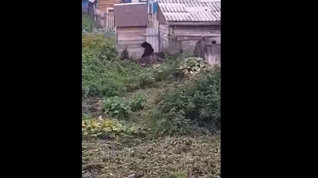 Медведь на улице новосибирского села до смерти перепугал жителей