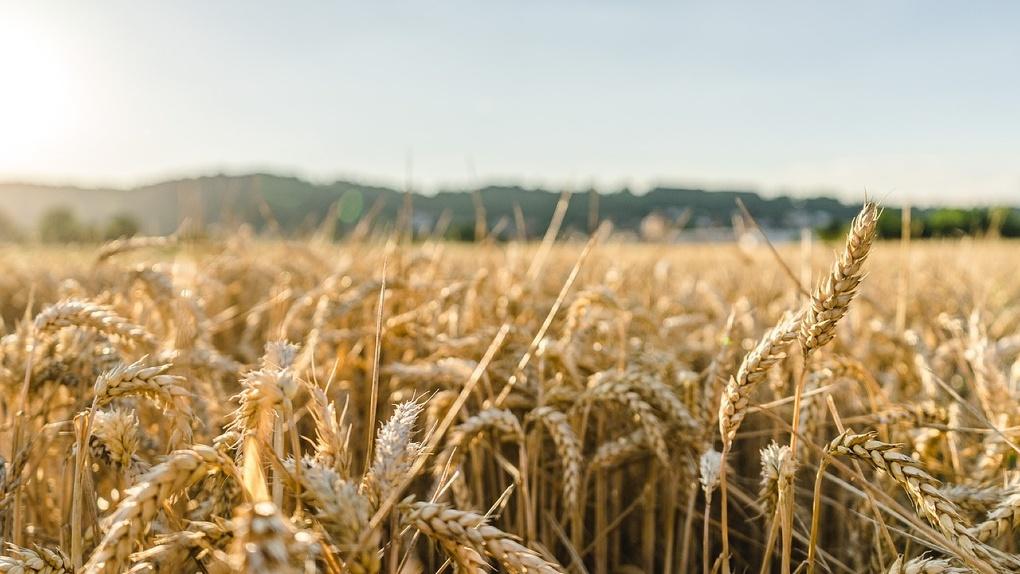 Эксперты поддержали идею губернатора продавать зерно на Филиппины