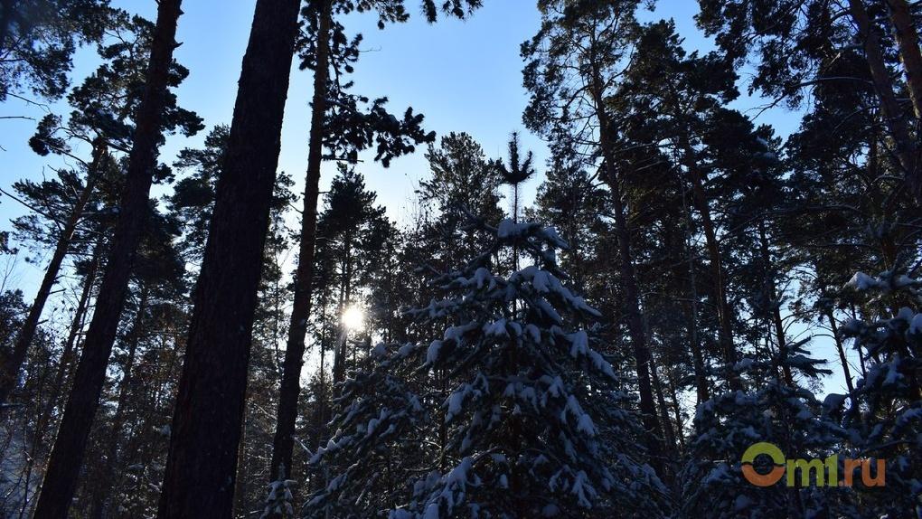 В Омской области разберутся с махинациями по рубке леса