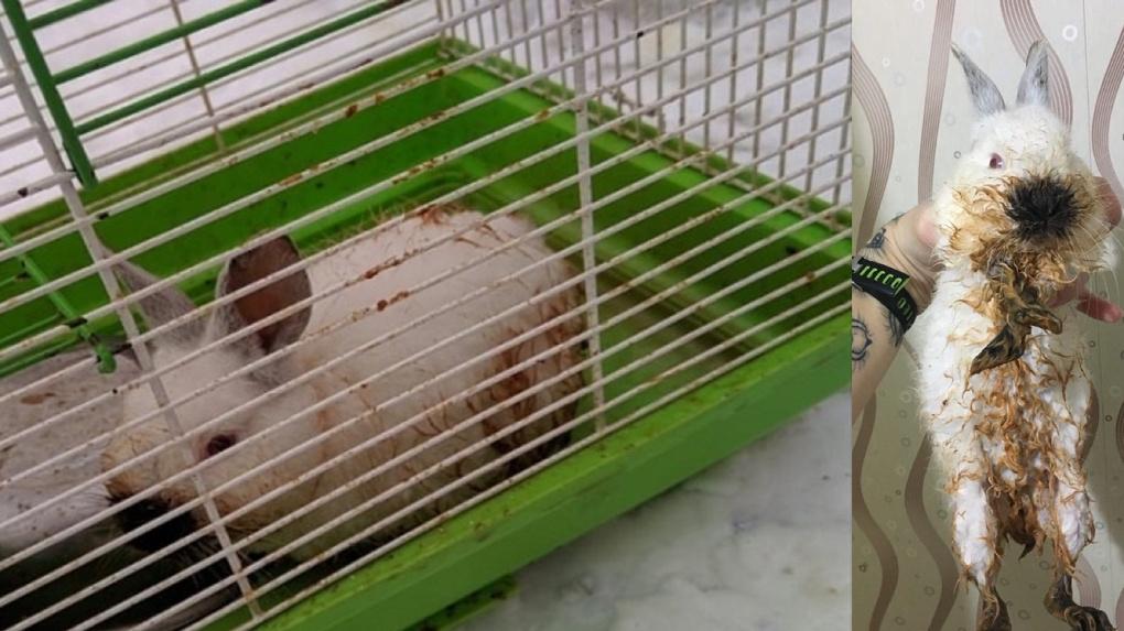 «Зайку бросила хозяйка»: трехмесячного кролика нашли на помойке в Новосибирске