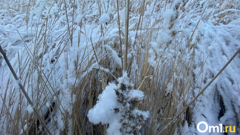Порывистый ветер и мощные снегопады обрушатся на Новосибирскую область