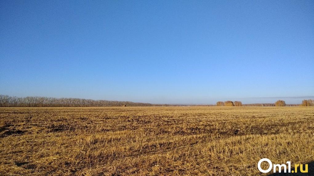Из-за засухи в шести районах Новосибирской области ввели режим ЧС