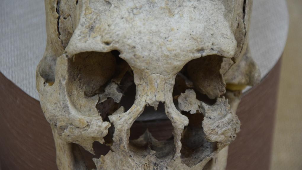 В Омске на всеобщее обозрение выставлен «инопланетный череп». ФОТО. ВИДЕО