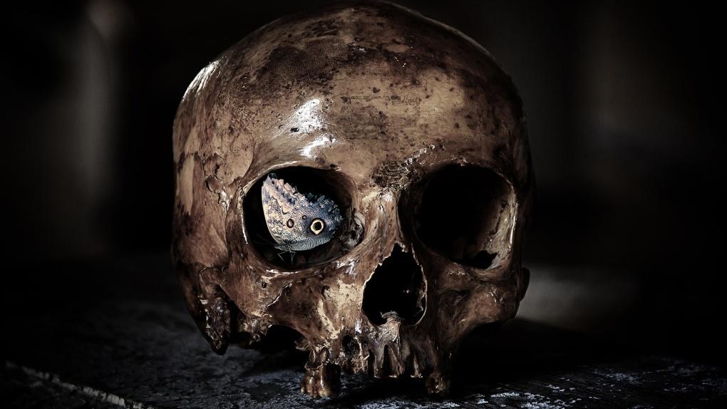 В Омске нашли череп бомжа, труп которого был найден пять лет назад