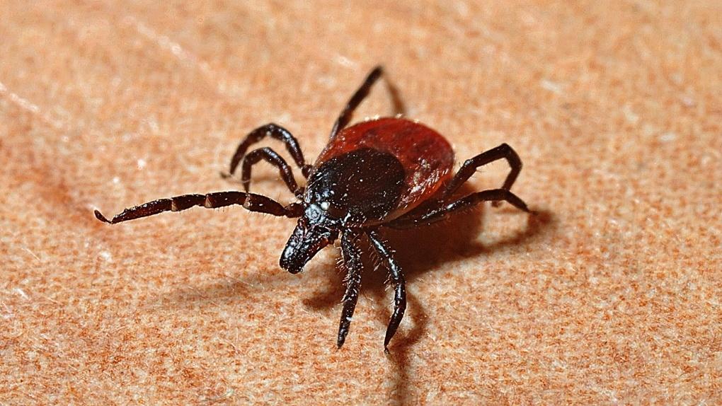 Четыре жителя Новосибирской области пострадали от укусов опасных насекомых