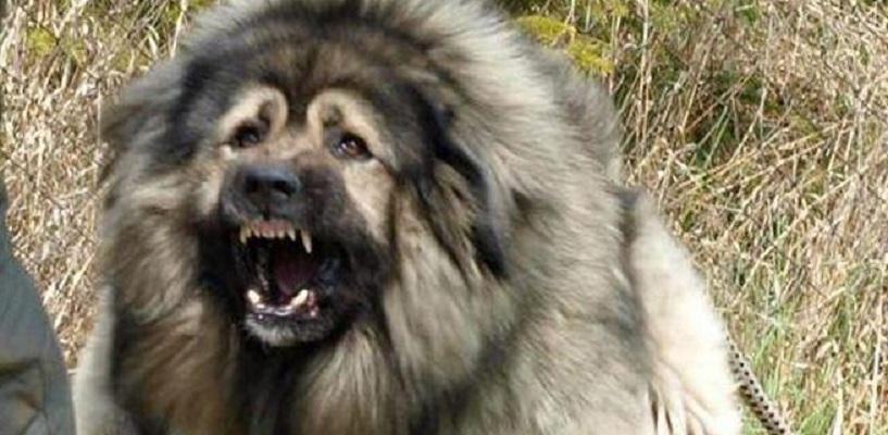 Омскому педиатру выплатят 108 тысяч рублей за укусы злой собаки