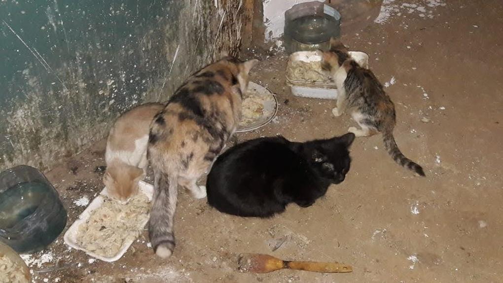 В Новосибирской области зоозащитники скандалят с председателем ТСЖ из-за блохастых кошек