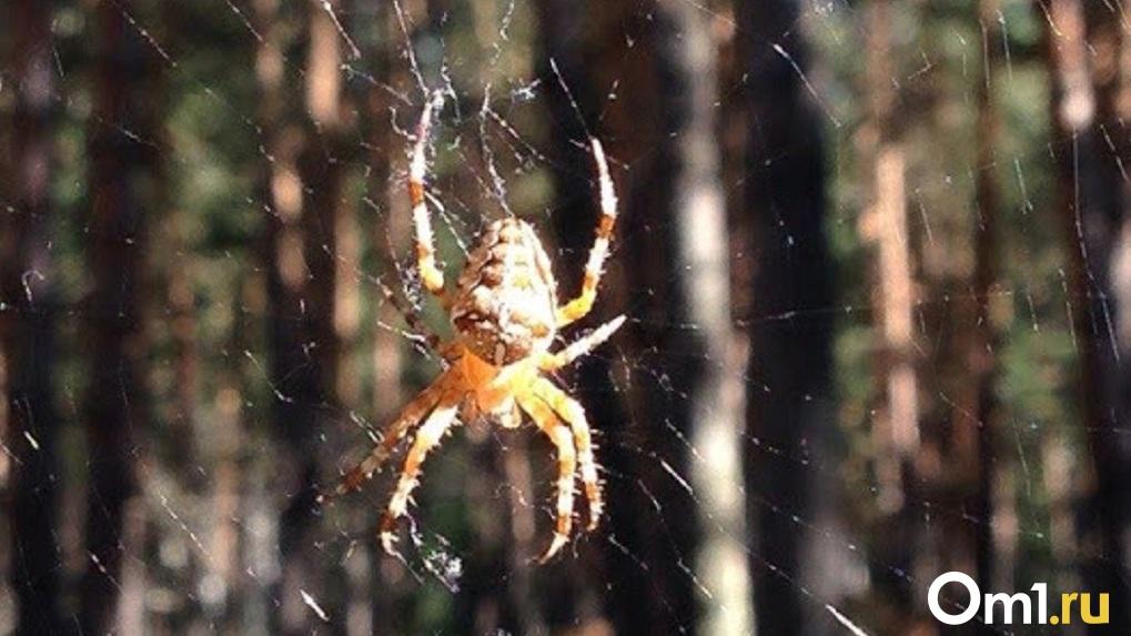 Огромный паук напугал жителей Омского района