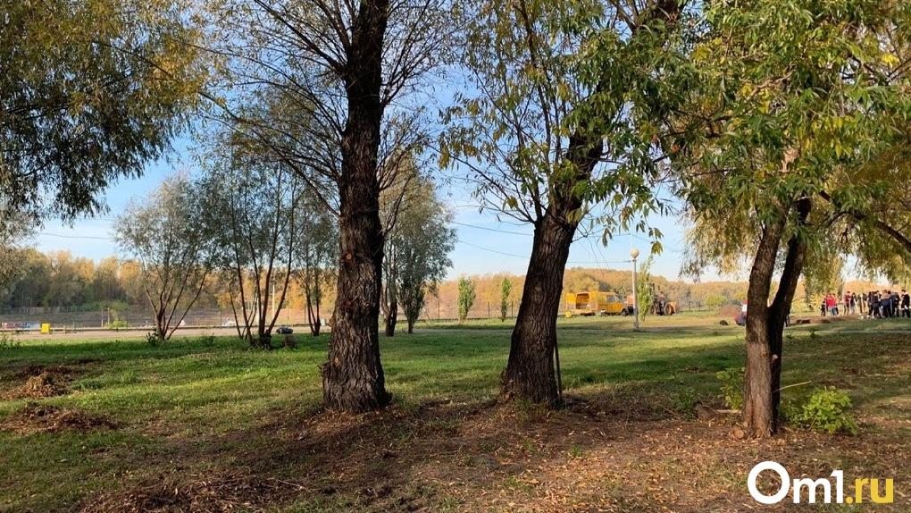 В Омске территории двух парков обработают от клещей