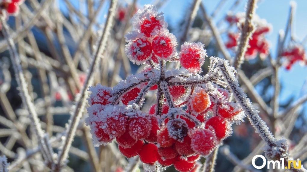 Заморозки до -3 ударят в Новосибирске