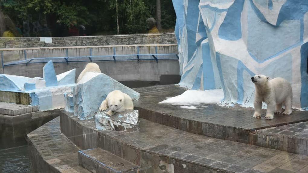 Новосибирскому зоопарку выделили 49,5 миллиона рублей на строительство вольеров и содержание животных