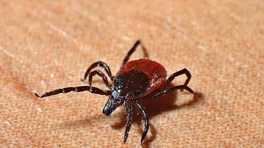 Смертельно опасные насекомые покусали почти 6 тысяч омичей