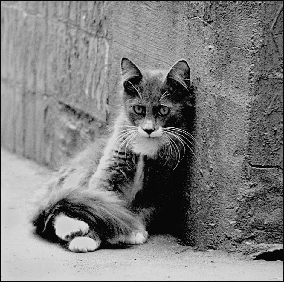 Омская прокуратура взялась за дело «кошачьего маньяка»