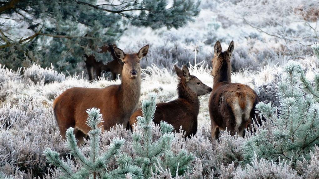 Животные Омской области ушли на покой после сезона зимней охоты
