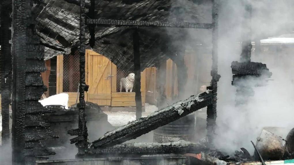 В МЧС назвали причину страшного пожара в новосибирском приюте для животных