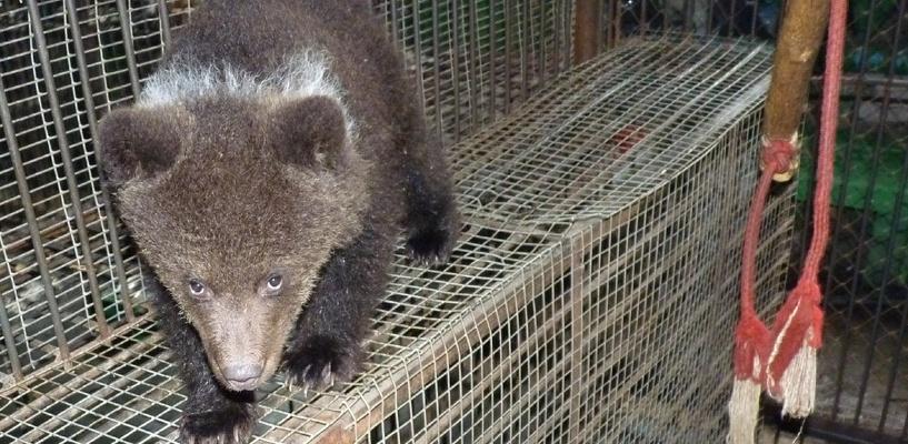 Экс-хоккеист «Авангарда» стал спонсором медвежонка, которого нашли в огороде и передали в Большереченский зоопарк