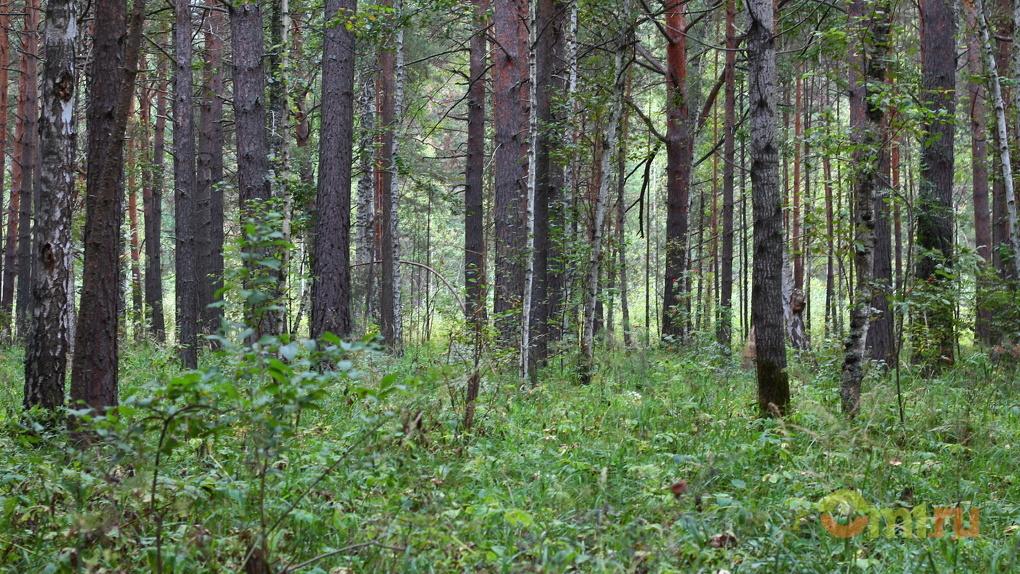 Омский вице-губернатор потребовал «в стихах и песнях» отчитаться о борьбе с лесными пожарами
