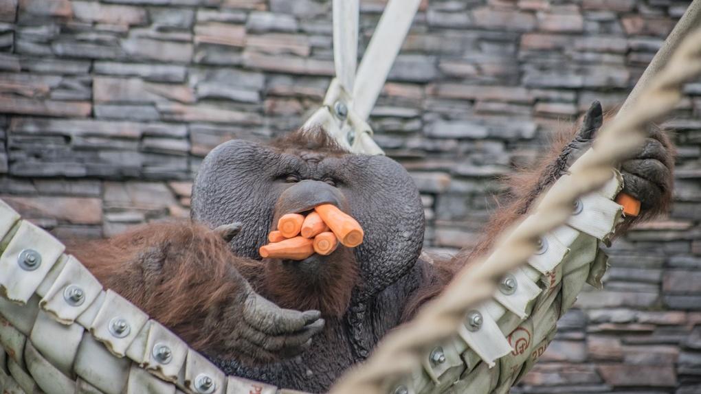 Новосибирцы пожертвовали зоопарку 17 тонн овощей и фруктов