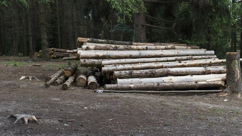 Президент запретил вывозить из России лес