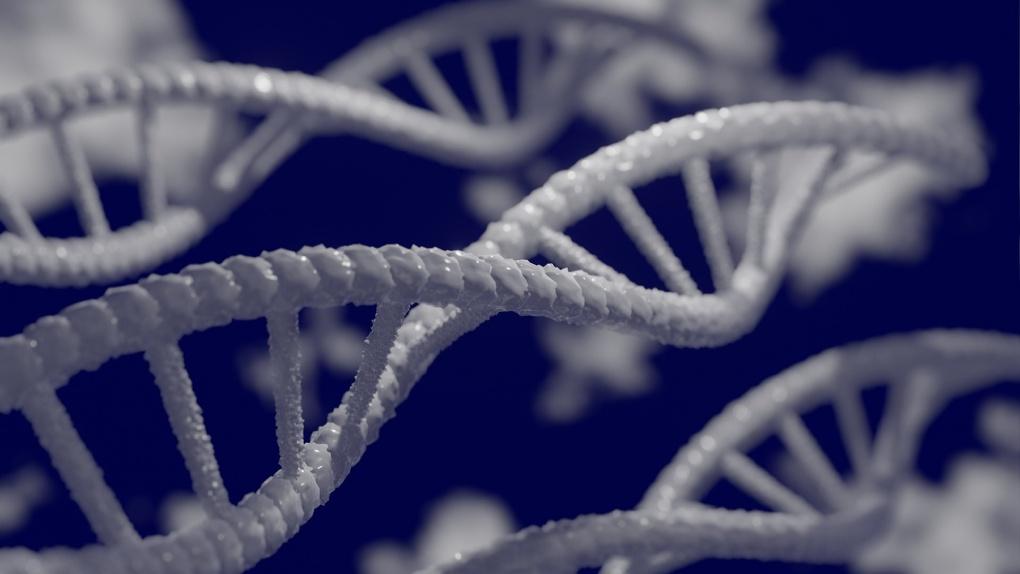 Генетиков будут учить в Новосибирском госуниверситете