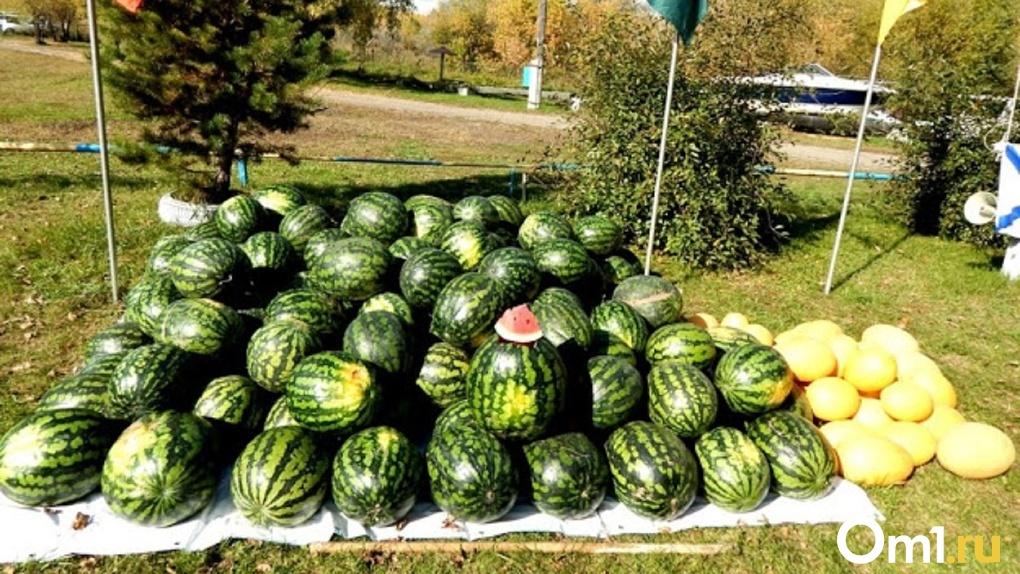 Роспотребнадзор проверил качество арбузов, которые начали продавать в Омске